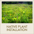 Native Plant Installation Services