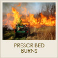 Prescribed Burn Services
