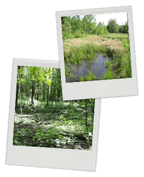Wetland Delineations